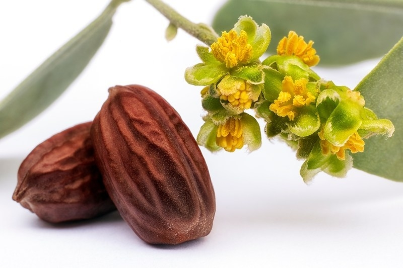 The Beauty Benefits of Jojoba